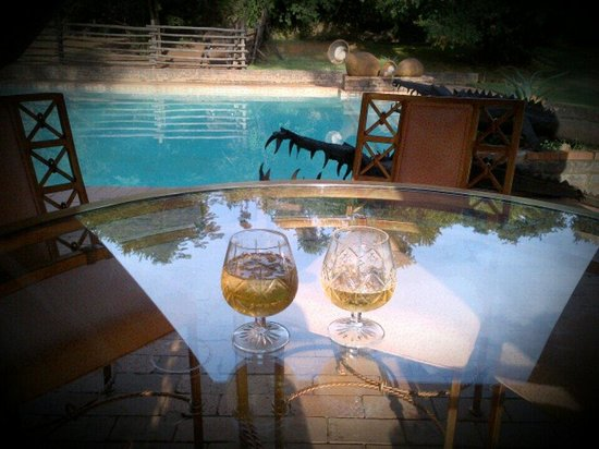 Hornbill Lodge : @ the pool