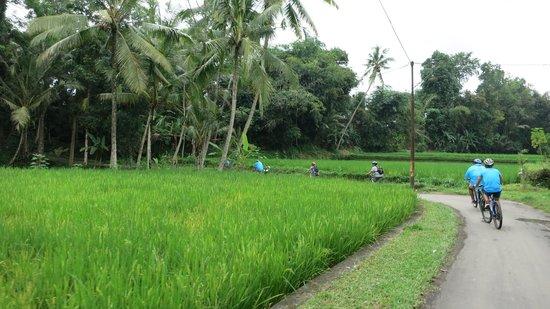 BaliGoBike - Bali Cycling Tours: Cycling through the country side