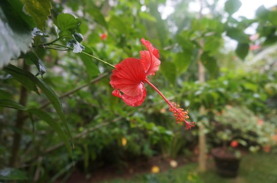Rumah Jepun: Lovely flowers in the yard