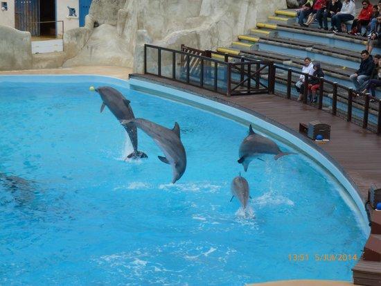 Parc Asterix: Spectacle avec les dauphins au Théâtre de Poséidon