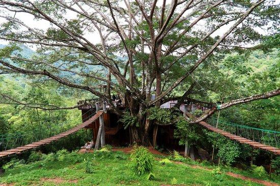 The Giant Chiangmai
