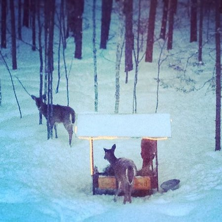 Escale du Nord : Deer Feeder view from room