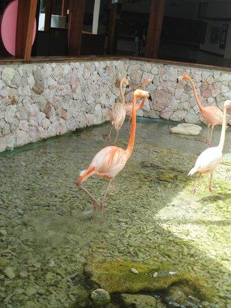 Dolphin Academy Curacao: Flamingos