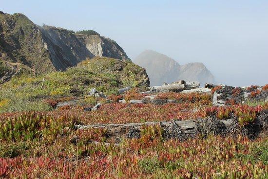 The Elk Cove Inn & Spa: on their beach