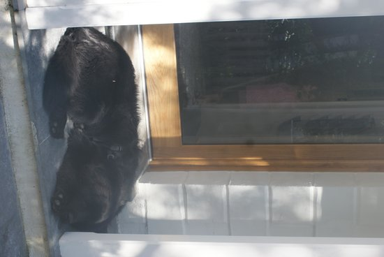 Penryn House Hotel: The black bear chillin on the door step