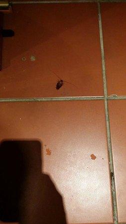 Movenpick Resort Sharm El Sheikh Naama Bay: Live Roach in the room