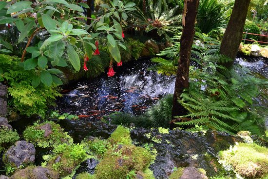 Monte Palace Tropical Garden: fish pond