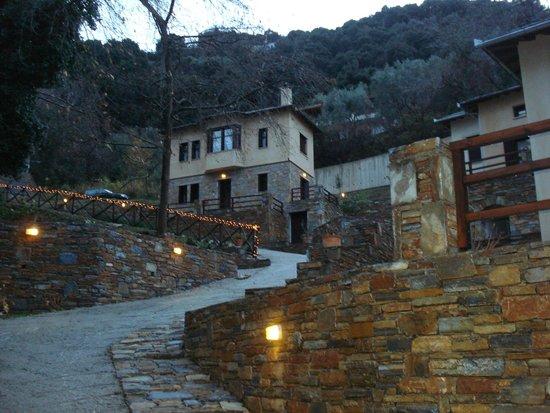 Vergopoulos Oliveyard: Η θέα των δωματίων μέσα από το κτήμα.