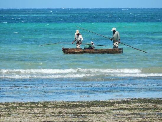Kinondo Poa: Fisching