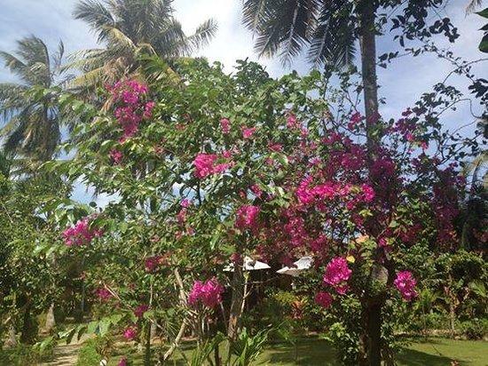 Thanh Kieu Beach Resort: Gardens