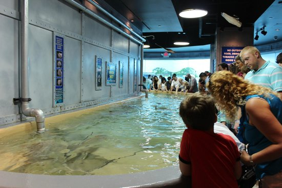 Downtown Aquarium: Reef Stingray Exhibit