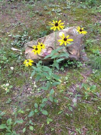 Lake Lucerne Resort: Nature on property