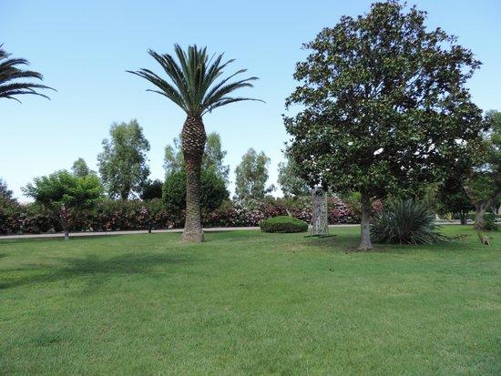 Hotel Airone del Parco & delle Terme : palmeti