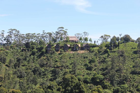 98 Acres Resort and Spa: Hotel view from little Adam's peak
