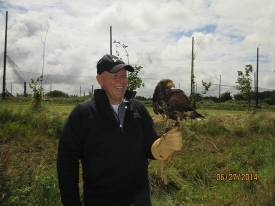 Dublin Falconry: Tom- Harris Hawk