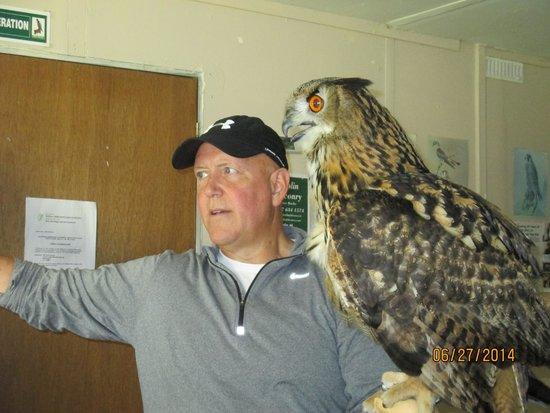 Dublin Falconry: Tom- owl experience