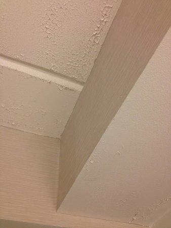 Hilton Albany: Peeling bathroom ceiling