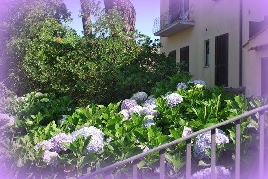 Hotel Delle Palme : le bellissime ortensie