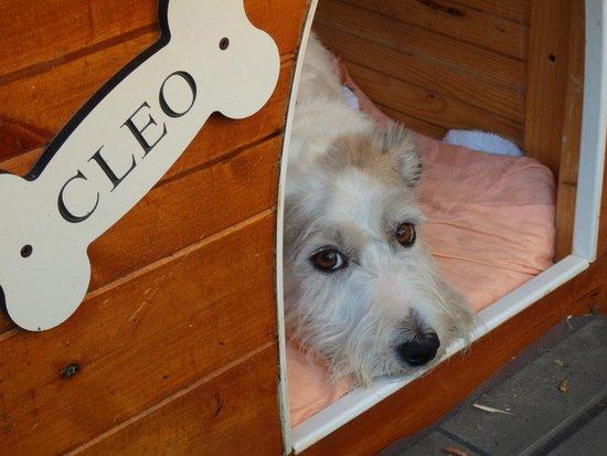 Relais La Corte dei Papi : Cleo - the villa pet ! Love this doggy...
