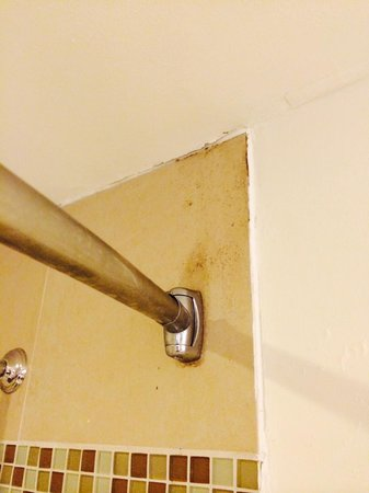 Caribe Hilton San Juan: Mold in the shower and ceiling