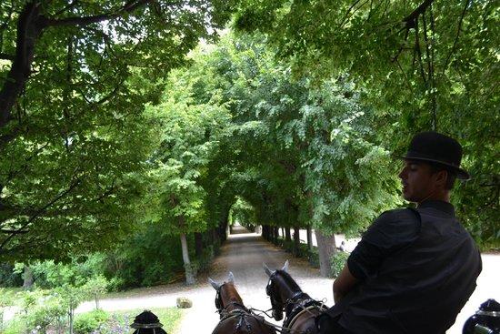 Schloss Schönbrunn: Carriage ride