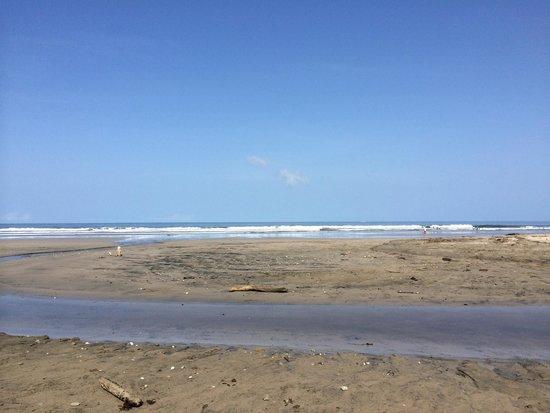 Surf Simply: Nearest beach