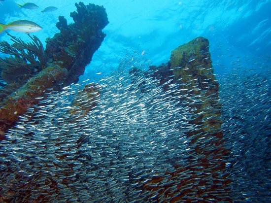 Conch Republic Divers: Wreck of the Benwood