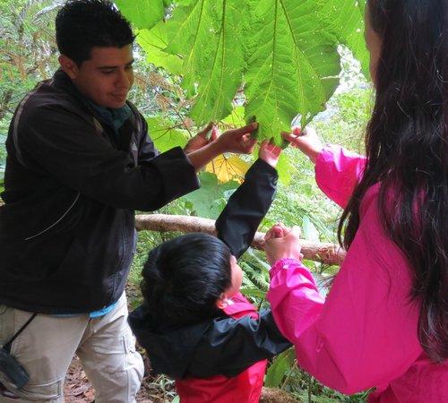 Go Tours Costa Rica - Day Tours: monteverde cloud forest tour