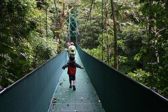 Go Tours Costa Rica - Day Tours: cloud forest tour Monteverde