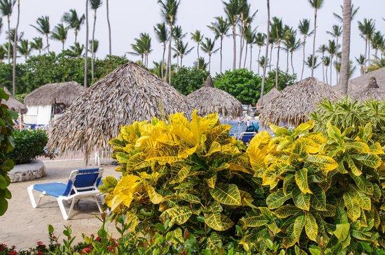 Sirenis Punta Cana Resort Casino & Aquagames: Sun beds at the large pool