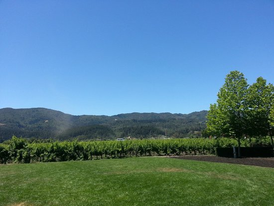 Alpha Omega Winery: Beautiful View