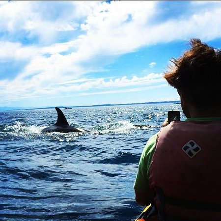 San Juan Kayak Expeditions - Day Tours: The Orca surfaced right in front of us!
