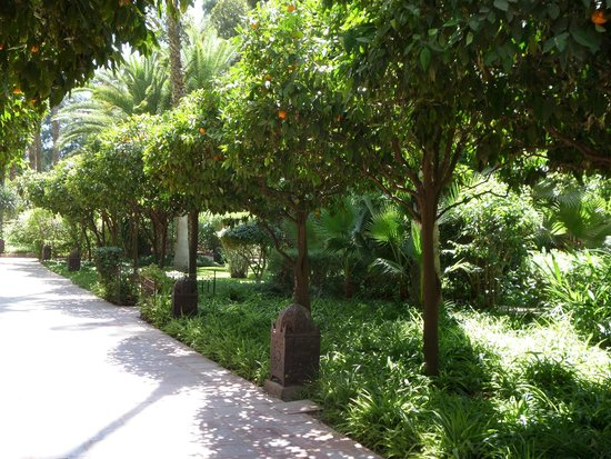 Es Saadi Gardens & Resort: Well kept gardens