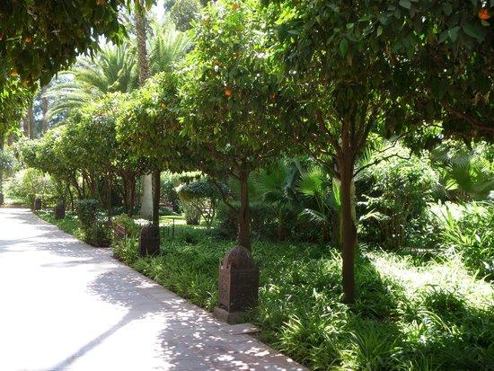 Es Saadi Marrakech Resort - Hotel : Well kept gardens