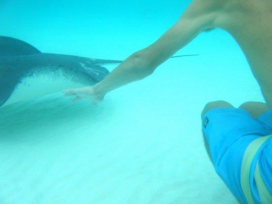 Tours Cayman : Amazing
