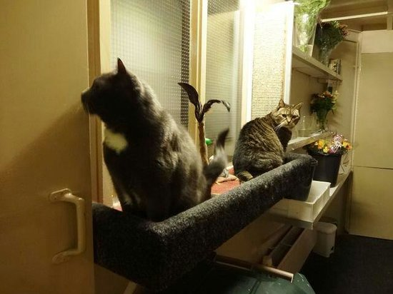 Hotel Nadia : ナディアホテル猫部屋(物置?)