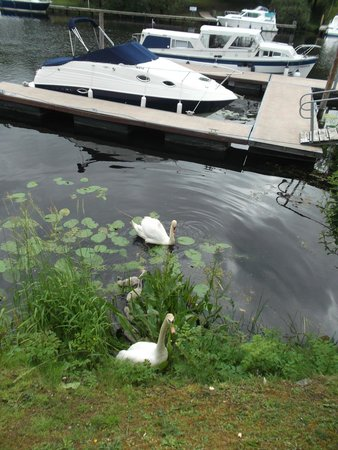 Carrybridge Lakeside Lodge: Marina with fab swan family