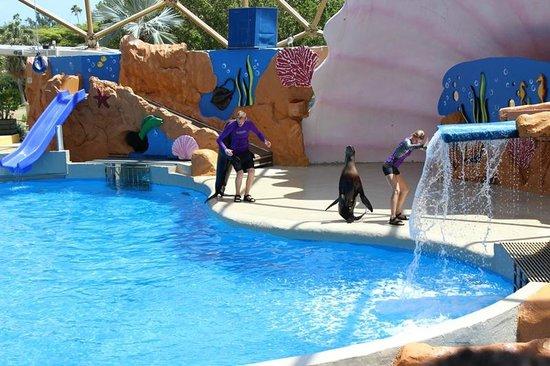 Miami Seaquarium : Leão marinho