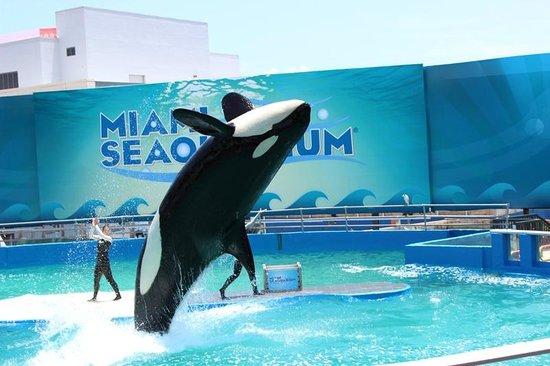 Miami Seaquarium : Show da Baleia