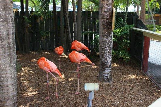 Miami Seaquarium : Flamingos