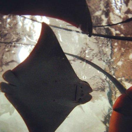 Acuario Mazatlan: ¡Visita el acuario si viajas a Mazatlán con niños!