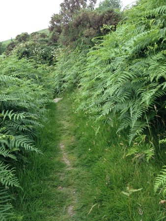 The Wicklow Way: five foot high ferns