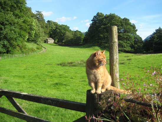 Crookabeck Bed & Breakfast: Beautiful countryside around Crookabeck