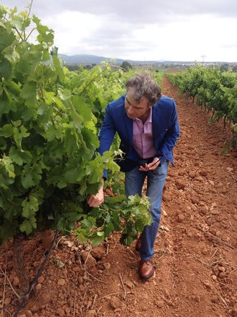 Valencian Cellar Tours: Telling us about the grapes