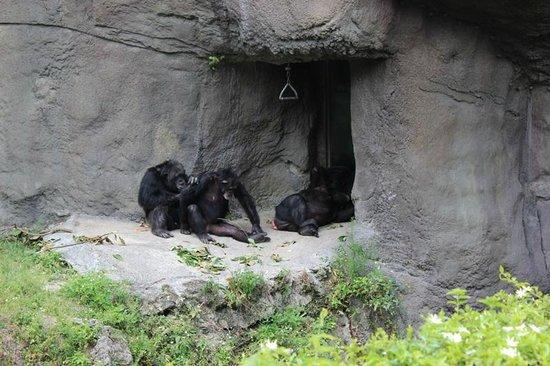 Zoo Miami: Macacos
