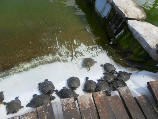 Zoomarine Algarve : the turtles you can feed