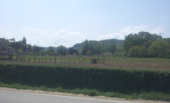 View of San Gimignano from the entrance of Tenuta Torciano.