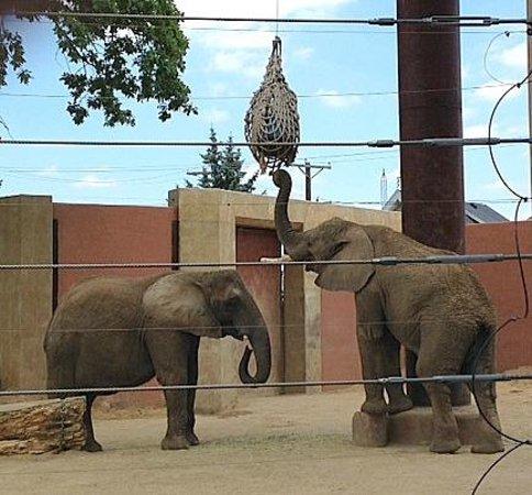 Toledo Zoo: Elephants!