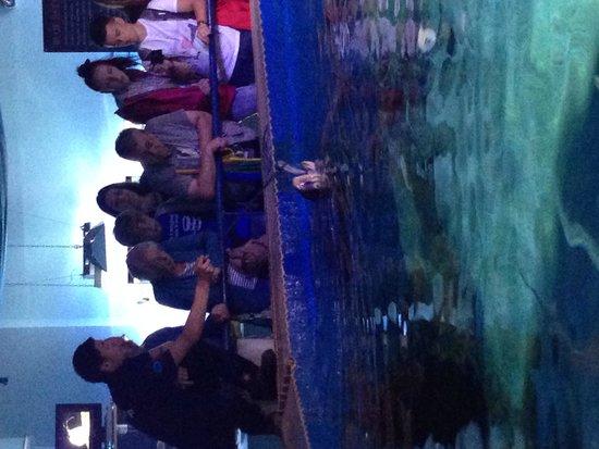 Blue Reef Aquarium: Turtle feeding