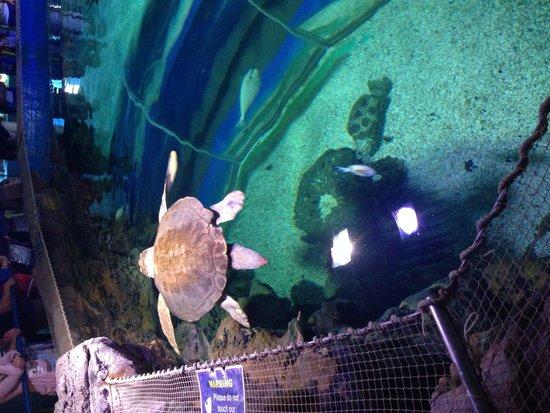 Blue Reef Aquarium: Turtle..
